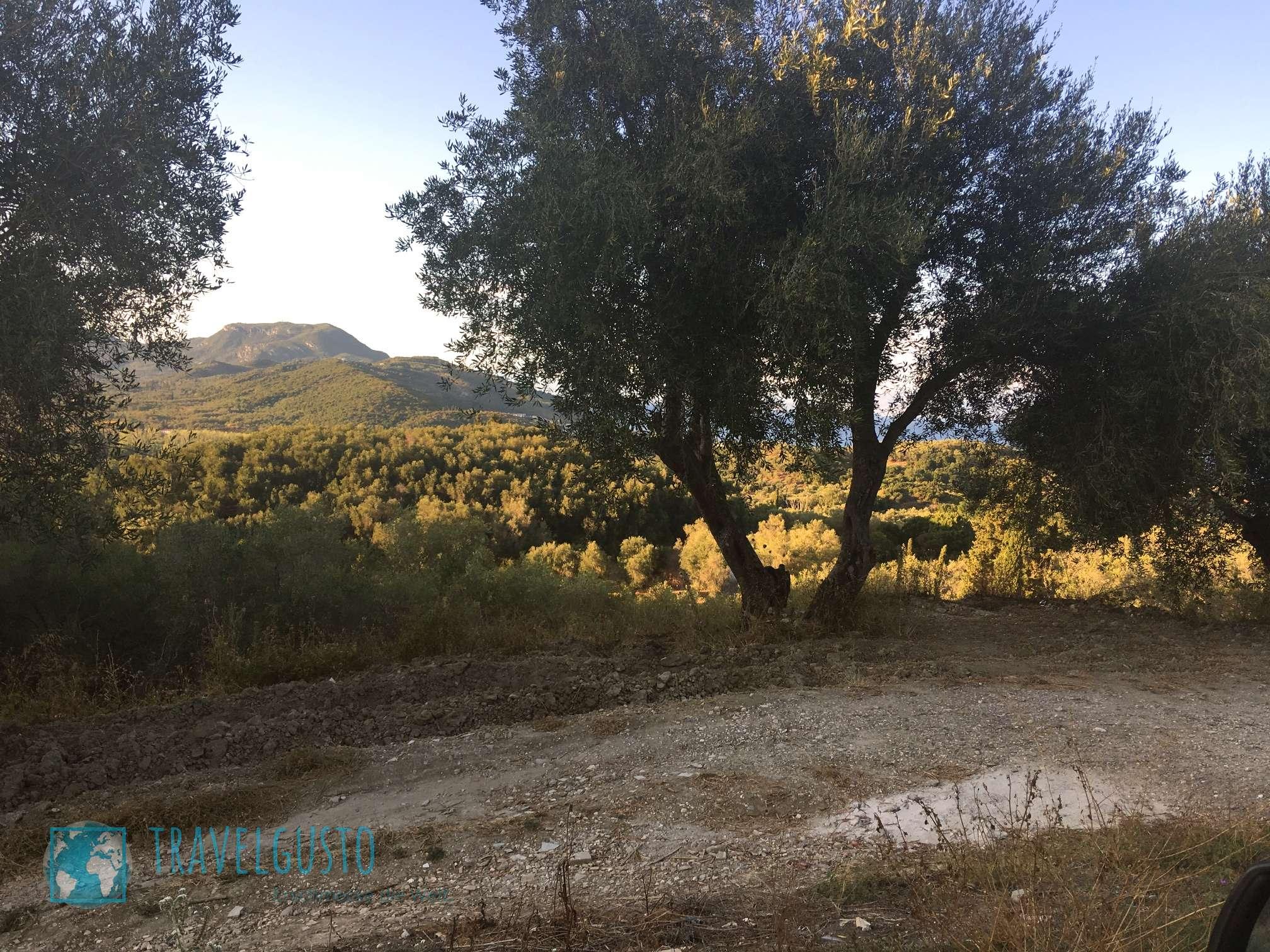 Mavroudis Olivenöl